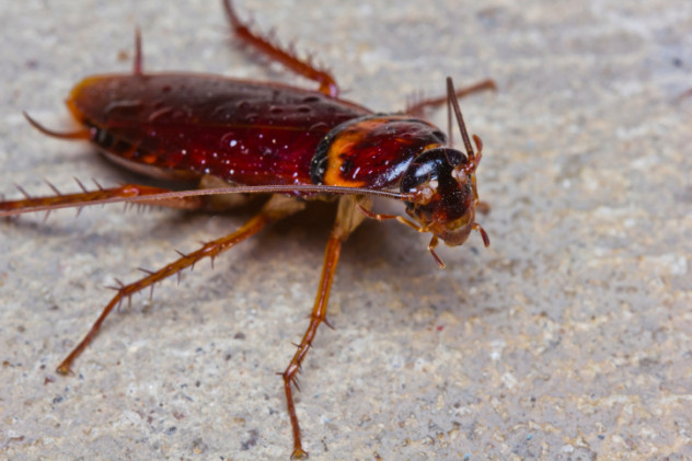 4bugs
