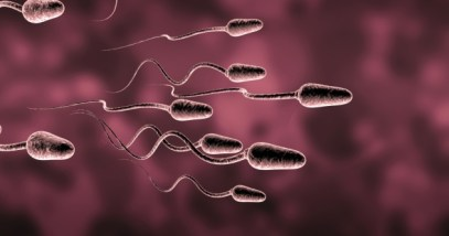 Sperm Featured