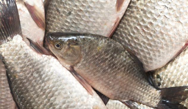 6-fresh-fish-486225584