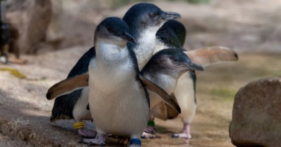 feature-use-this-penguin-480252246