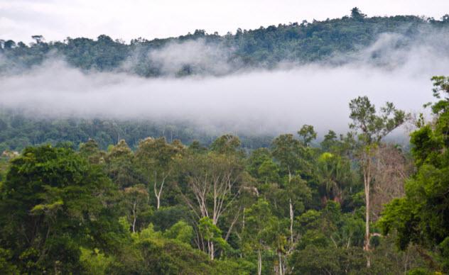 4-rain-forest_000048772556_Small
