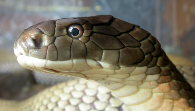 8-snake_000001218469_Small