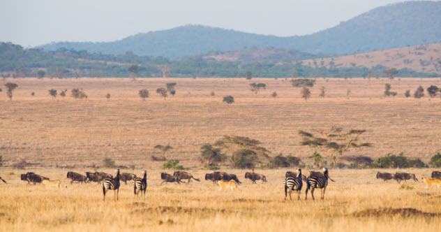 10-serengeti_000031495280_Small