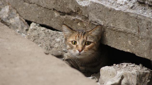 9-lost-cat_000079606035_Small