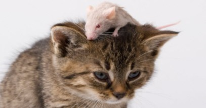 feature-cat-mouse_000004614718_Small