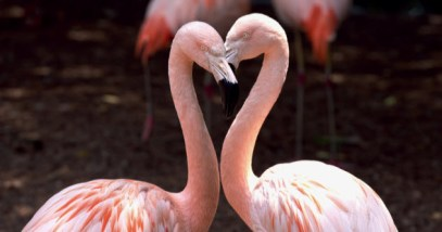 feature-flamingo-couple_000027136810_Small