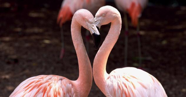 feature-flamingo-couple_000027136810_Small