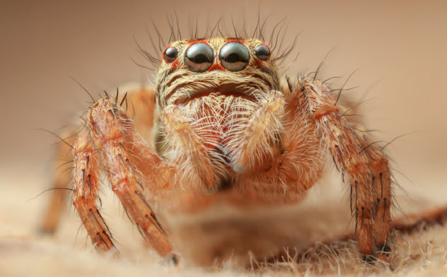 5-eye-spider_000044860356_Small