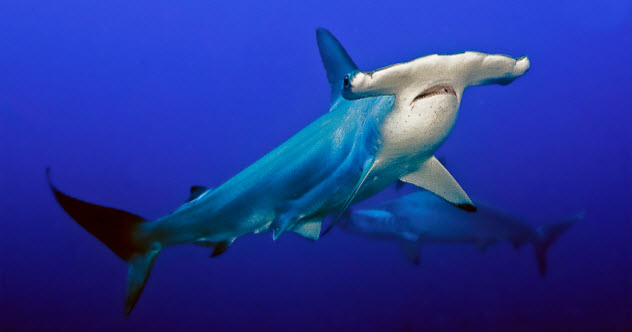 feature-1-hammerhead_000036829412_Small