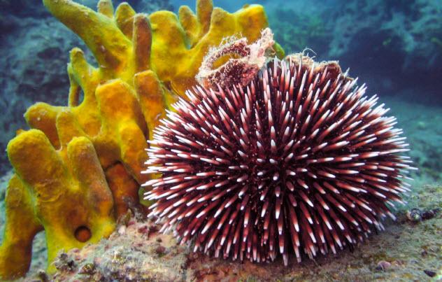 2-sea-urchin_000079580599_Small
