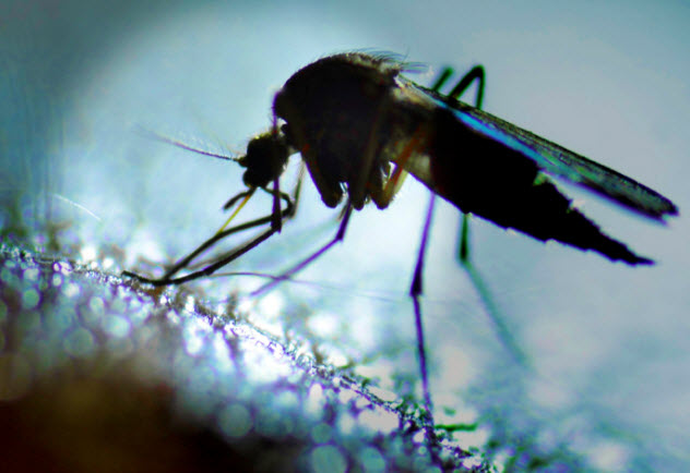 6-mosquito_000059432004_Small