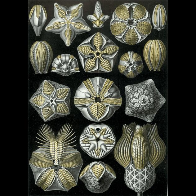Blastozoans