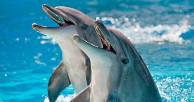 feature-a-7-dolphins_000009566348_Small