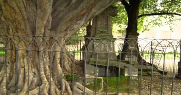 4-vampire-tree