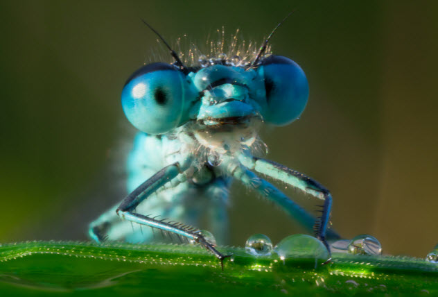5-dragonfly-eyes_34812790_SMALL
