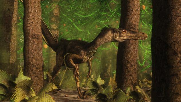 5-velociraptor_73290379_SMALL