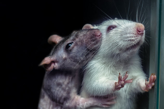 6b-rats_000082999537_Small