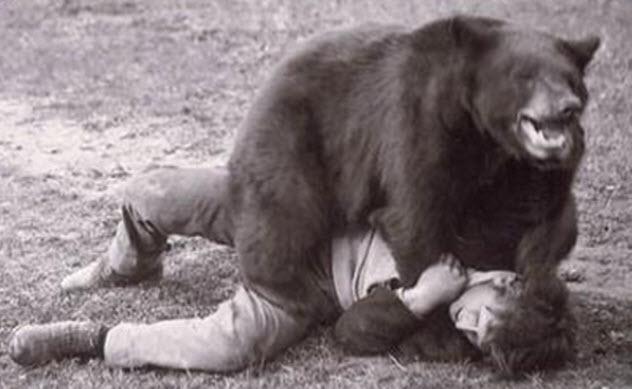 6b-bear-wrestling