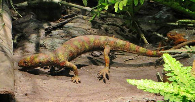 8a-Hylonomus-lyelli