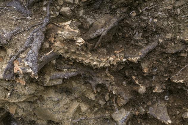 Ireland Tree Skeleton