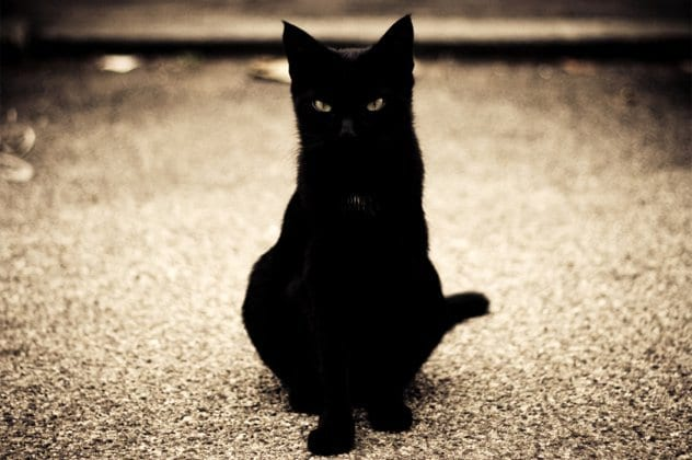 List Of Black Cat Superstitions
