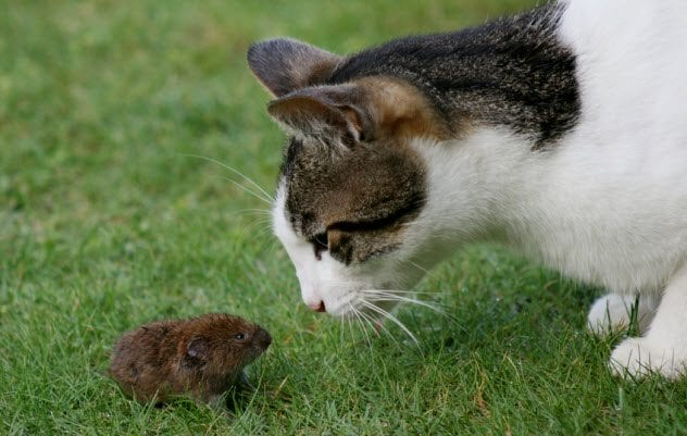 1b-cat-and-mouse_68918365_small