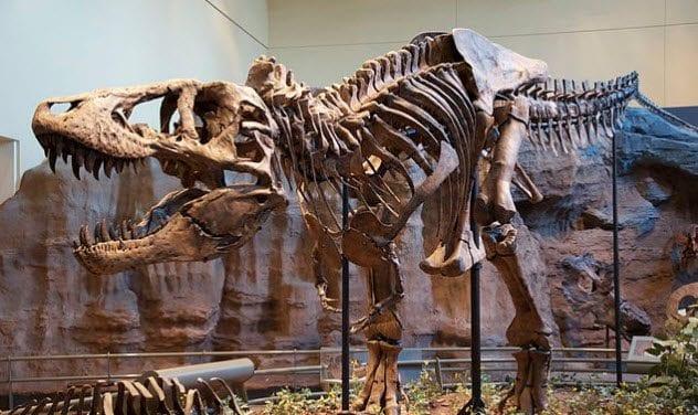 1-t-rex