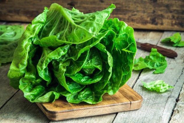 9a-lettuce-535910387