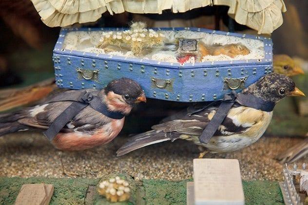 death-burial-cock-robin