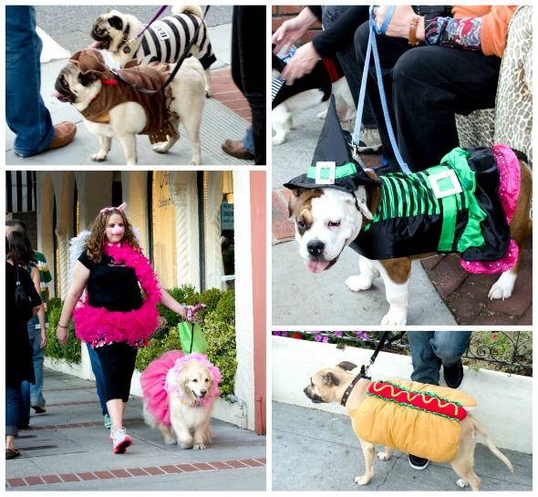 puppies in costume