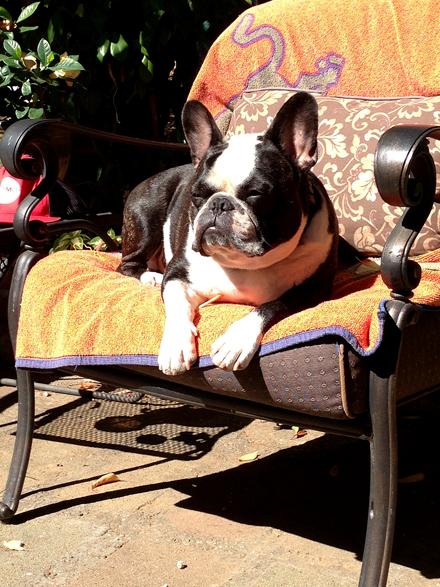 Bubba in the sunshine