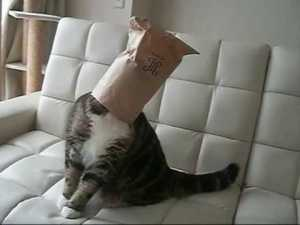 maru the cat9