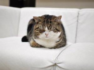 maru the cat5