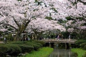 kanazawa kenrokuen garden5