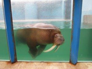 otaru aquarium4
