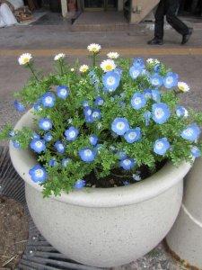 flowers japan 17