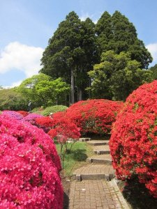 flowers japan 24