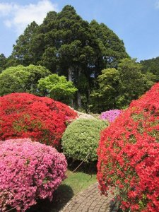flowers japan 26
