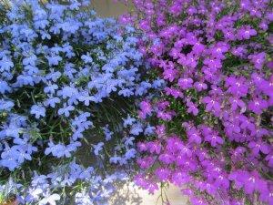 flowers japan 6