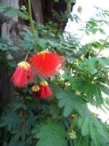flowers japan 8