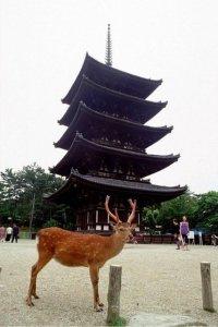 nara deer pagoda