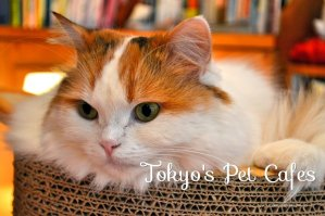 tokyo pet cafesx