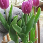 Manatee Monday: Happy Spring!