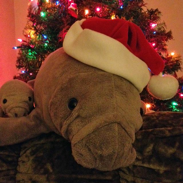 Merry Manatee Monday!