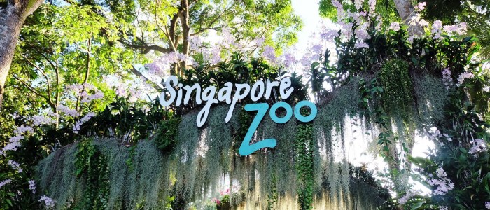 NAJ'S SINGAPORE ZOO BIRTHDAY