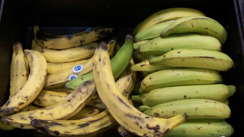 What's The Difference Between Bananas And Plantains?