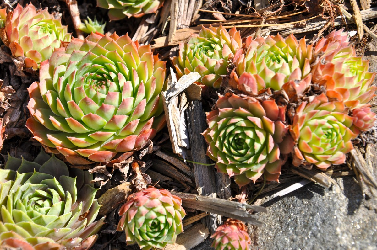 Tips for indoor Succulents