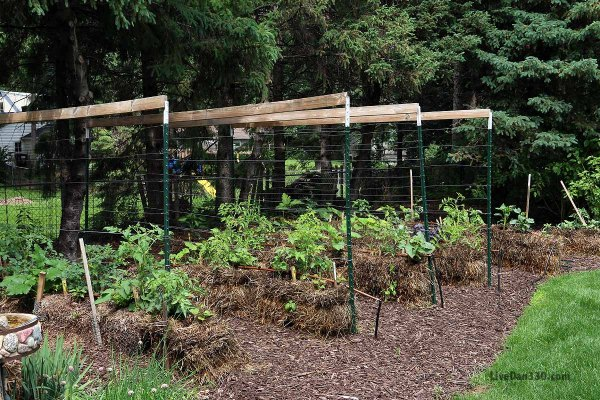 Another Kind Of Trellis Joel Karsten Straw Bale Gardening Dan330
