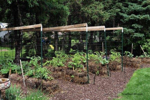 Another kind of trellis joel karsten straw bale gardening dan330 for Straw bale gardening joel karsten