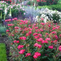 Add Interest To Your Garden With These Useful Tips.
